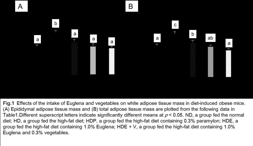 Simultaneous intake of Euglena powder and vegetable powder improves